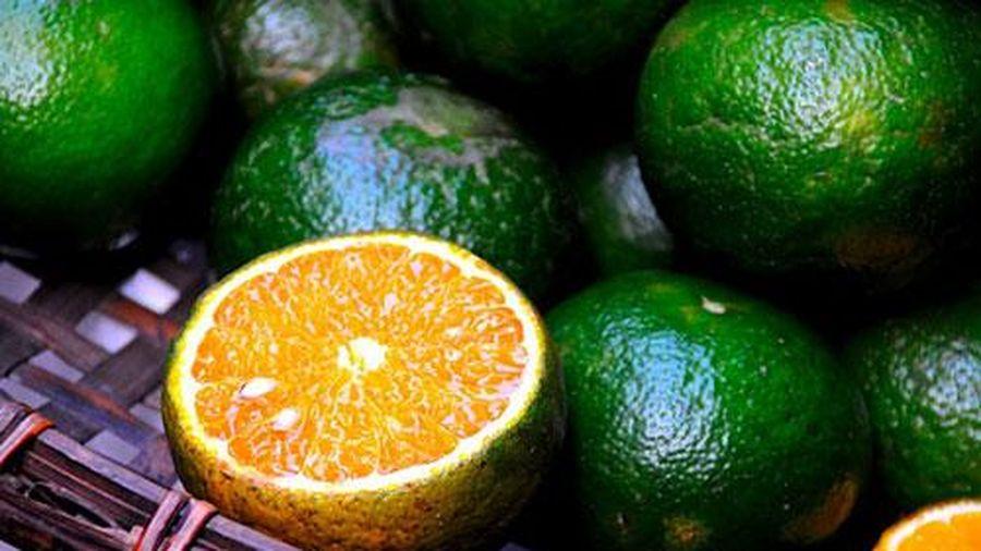 Dân buôn hoa quả chỉ cách đơn giản nhất giữ cam tươi lâu, không bị khô nước