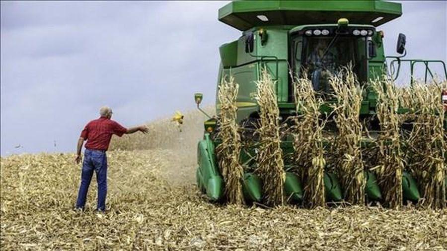 Thị trường nông sản Mỹ biến động trái chiều