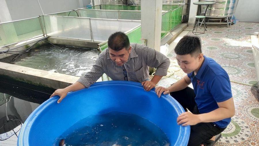 Kiếm tiền tỷ mỗi năm nhờ nuôi và kinh doanh cá Koi