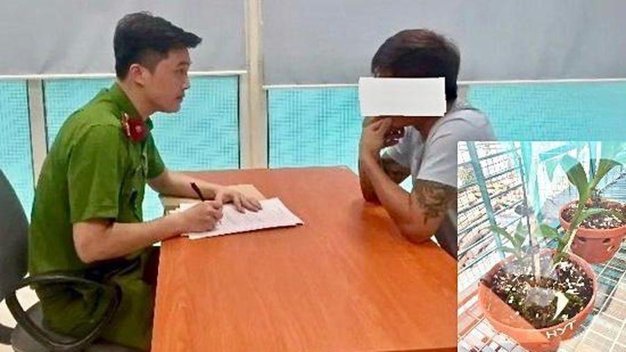 Vụ nhiều cá nhân 'tố' bị lừa tiền tỷ ở Ứng Hòa, Hà Nội: Chủ vườn lan không bỏ trốn!