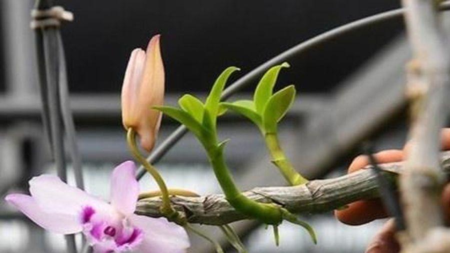 Lời khai của chủ vườn lan Hà Thanh