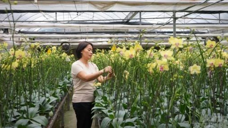 Phụng Công, xã tỷ phú nhờ hoa