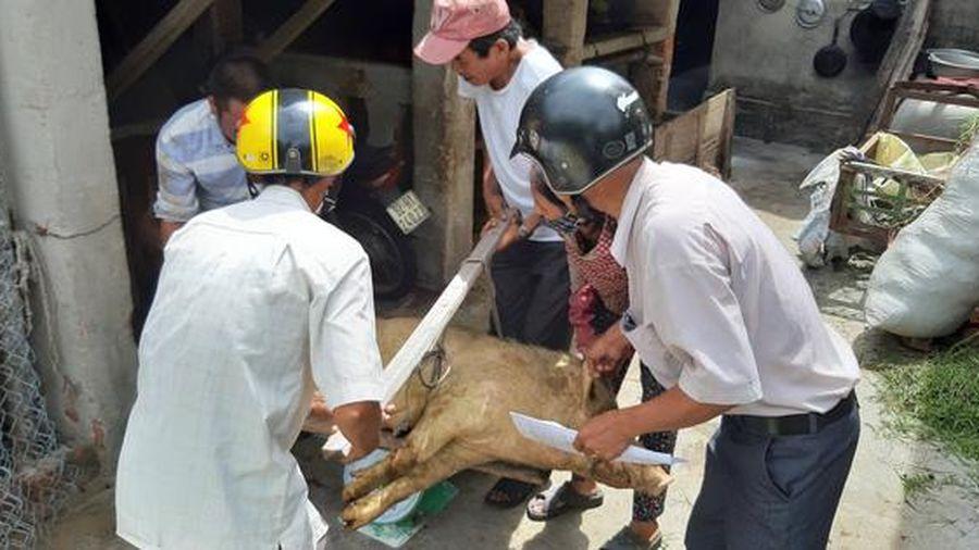 Họp HĐND Quảng Nam: Trình thông qua nơi không được phép chăn nuôi