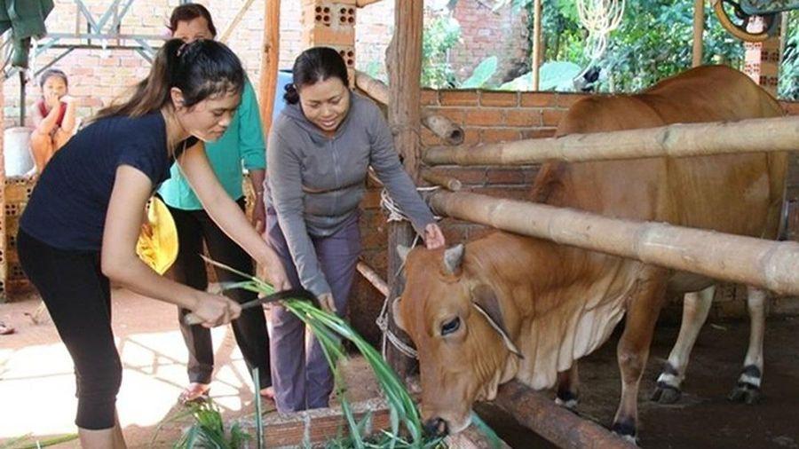 Kết nối doanh nghiệp về thôn, ấp để đẩy mạnh giải quyết việc làm ở Bình Phước