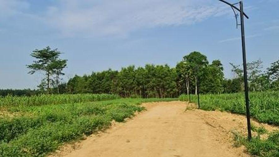 Cần làm rõ việc ồ ạt chuyển đổi đất trồng cây hàng năm để phân lô, bán nền