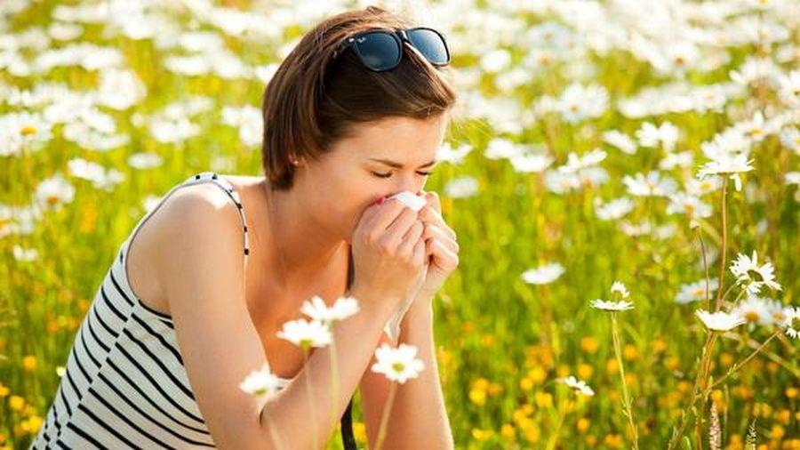 Nồng độ phấn hoa làm tăng ca nhiễm SARS-CoV-2?