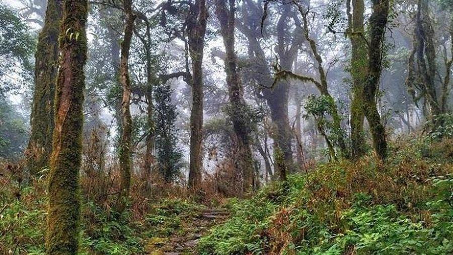 Khám phá con đường đá cổ Pavi gần 100 tuổi