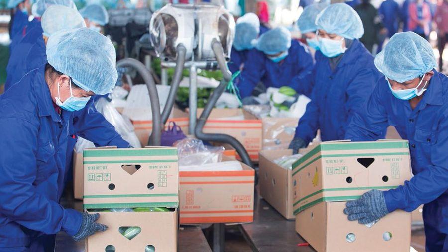 Hoàng Anh Gia Lai (HAG) đã bán hơn 72 triệu cổ phiếu HNG