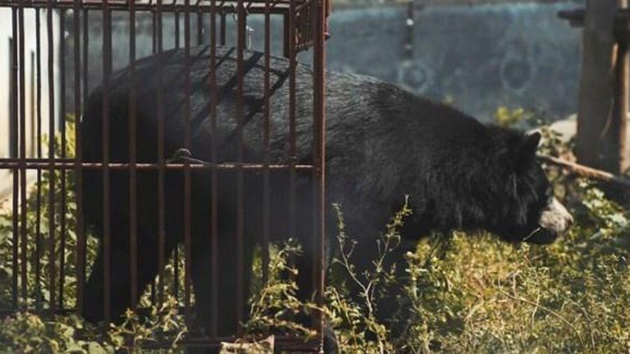 Phim ngắn 'Ác mộng của bạn-Hiện thực của gấu' hướng tới thay đổi cách ứng xử với thiên nhiên