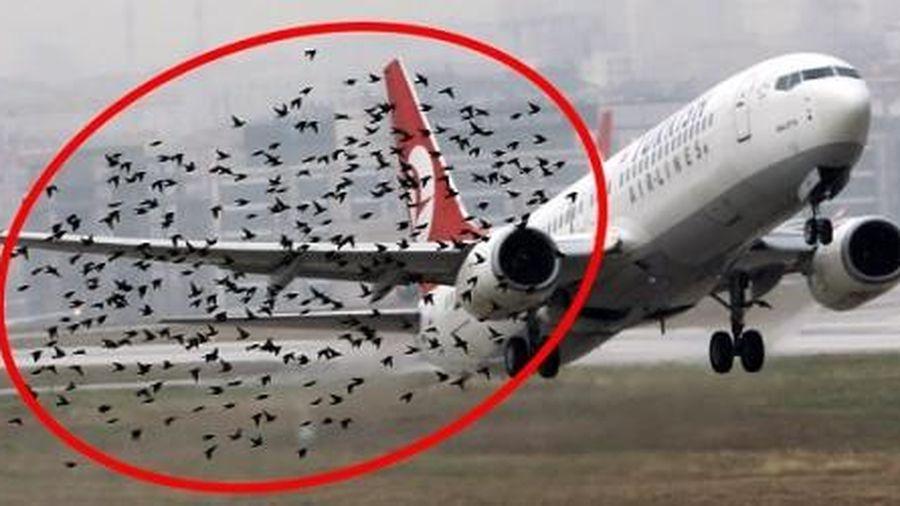Hành khách phải chờ 4 giờ đồng hồ bởi đàn chim di cư va vào càng máy bay làm vỡ ống dầu