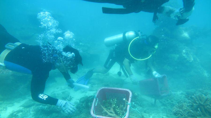 2 năm kỳ công khôi phục rạn san hô Côn Đảo