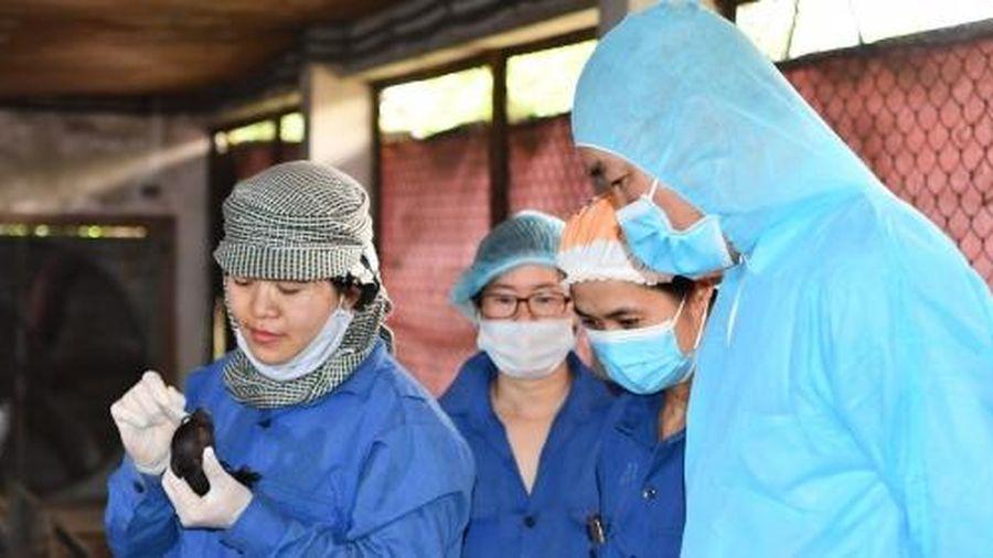 Năng suất đàn lợn Việt Nam đã tiệm cận thế giới