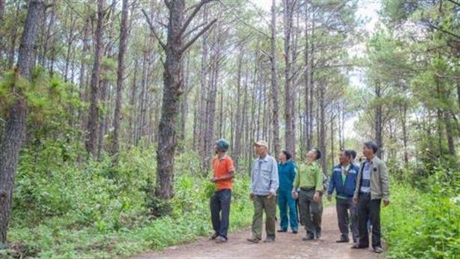 Mỹ giúp Việt Nam Quản lý rừng-Bảo tồn đa dạng sinh học