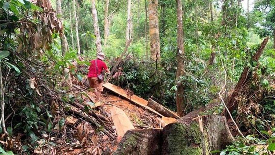 Cắt xén tiền bảo vệ rừng tại TT-Huế?