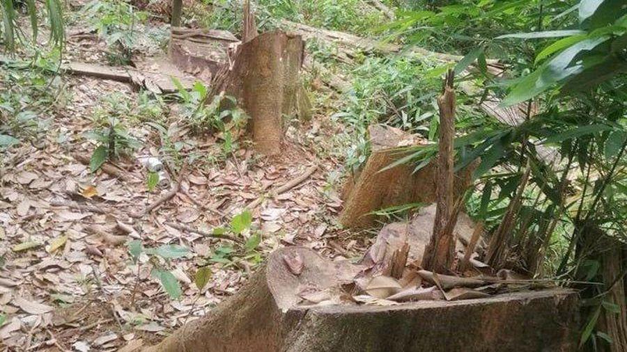 TT-Huế: Xác định sai phạm việc trích tiền giao khoán bảo vệ rừng