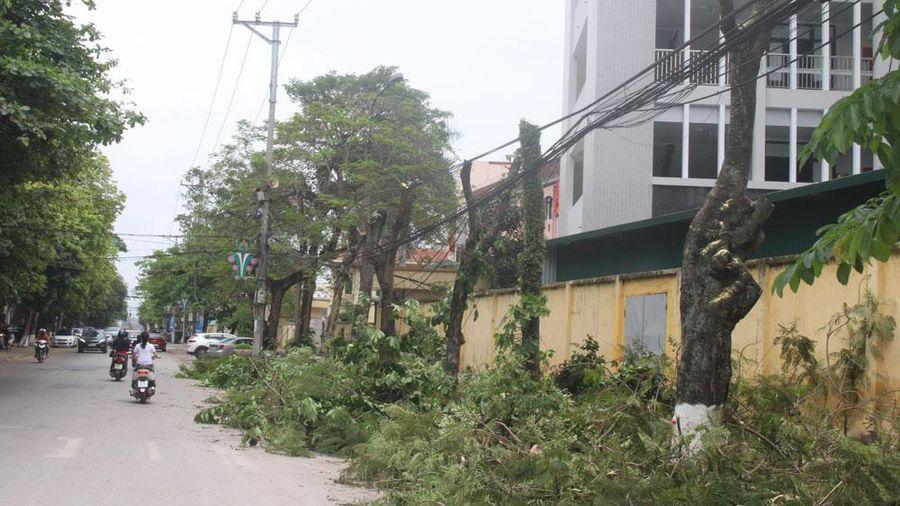 Bắc Giang: Trồng mới cây xanh tại 12 tuyến đường, phố