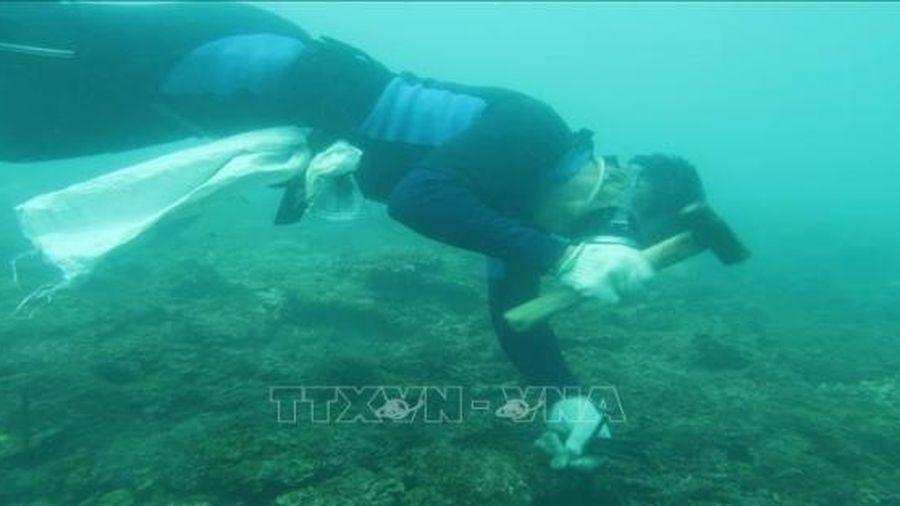 Phục hồi thành công san hô tại trên nền đáy tự nhiên và nhân tạo ở Côn Đảo