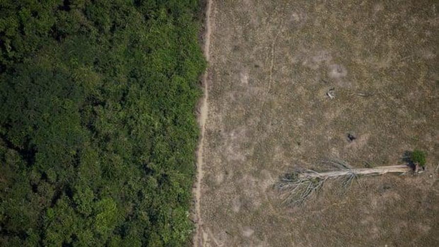 Amazon thải ra nhiều carbon hơn lượng carbon hấp thụ vào trong 10 năm qua