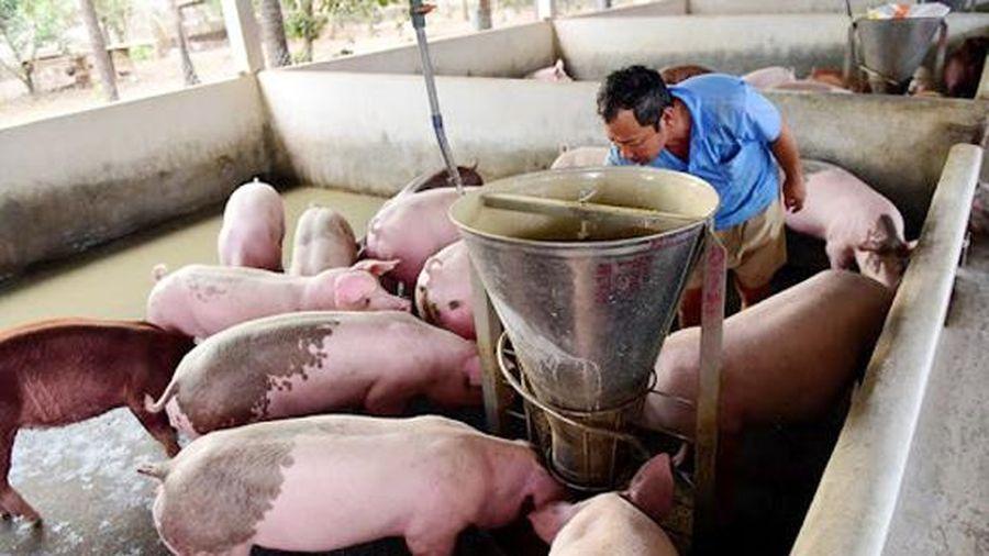 Giá lợn hơi hôm nay 6/5/2021: Cả 3 miền tiếp tục giảm 1.000 - 3.000 đồng/kg