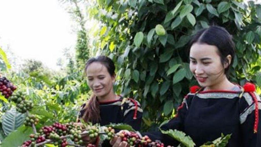 Giá cà phê hôm nay 6/5: Thị trường tiếp tục tăng mạnh