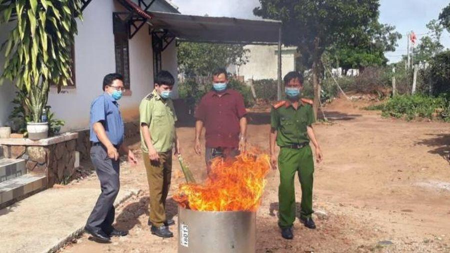 Tiêu hủy sản phẩm giả sâm Ngọc Linh ở Kon Tum