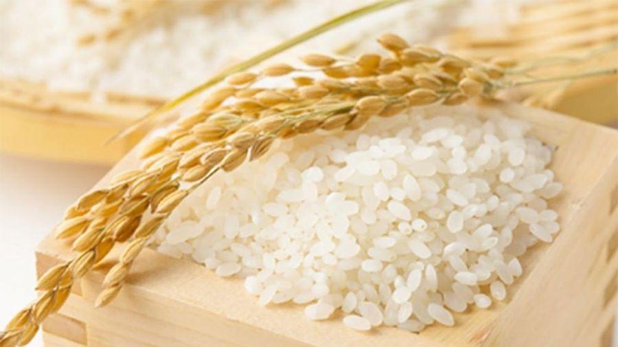 Giá lúa gạo hôm nay 6/5: Giá nội địa và xuất khẩu đồng loạt bật tăng