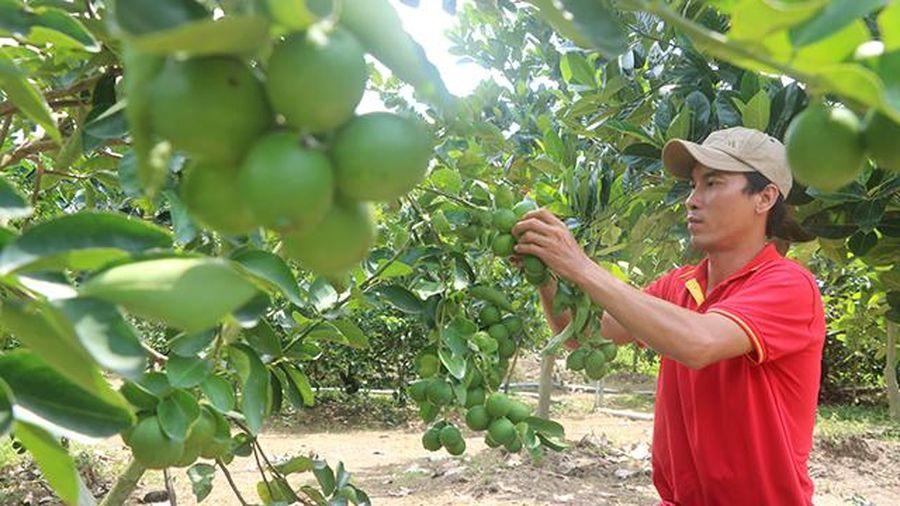 Nông dân thay đổi tư duy sản xuất để thích ứng với thị trường