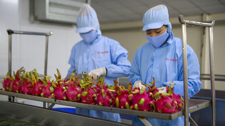Tấp nập đầu tư nhà máy chế biến rau quả