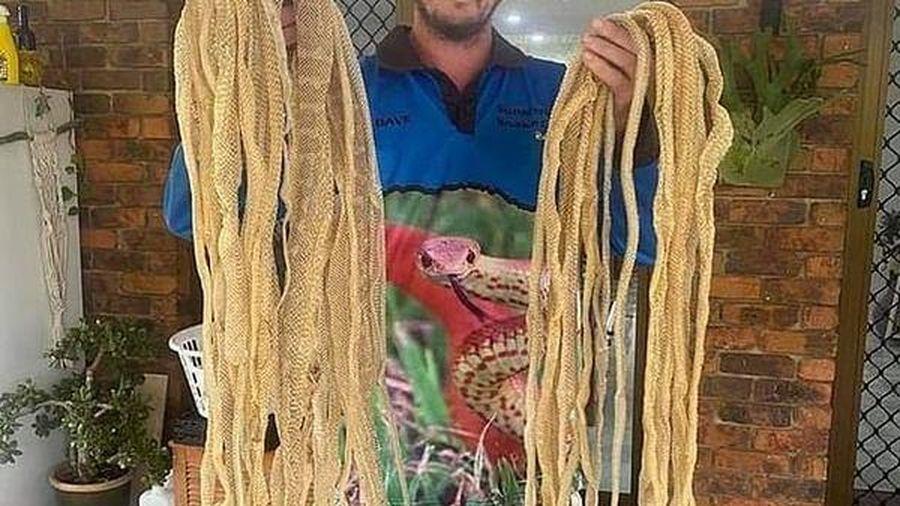 Ám ảnh khi phát hiện 50 tấm da rắn chình ình trên mái nhà