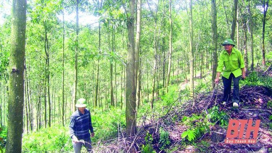 Bảo vệ gắn với phát triển rừng hiệu quả tại Ban Quản lý rừng phòng hộ Như Thanh