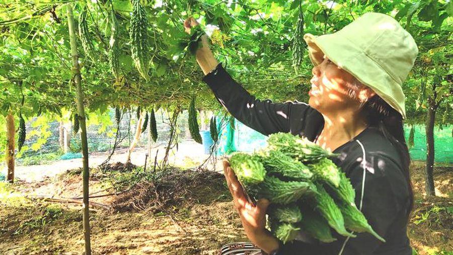 Hiệu quả từ mô hình nông nghiệp sạch
