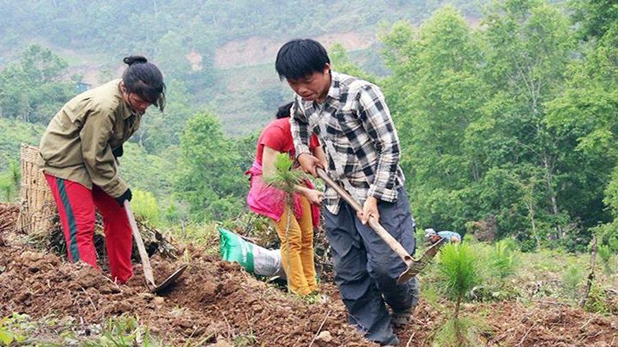 Các địa phương tăng cường bảo vệ, phát triển rừng
