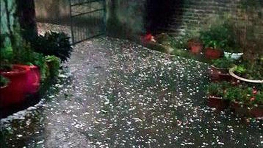 Nghệ An: Mưa và gió lốc gây thiệt hại cho sản xuất nông nghiệp
