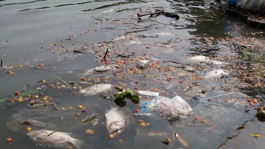 Hồ Tây đang ô nhiễm, chưa có cách xử lý hiệu quả