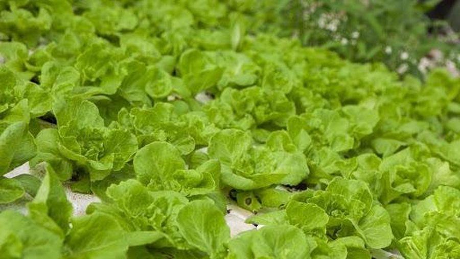 Giá thực phẩm ngày 9/5: Giá rau củ quả tiếp tục đà giảm