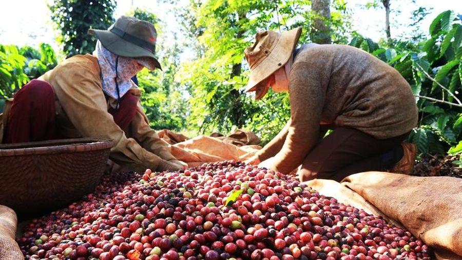 Nông sản Việt: Đừng thờ ơ với chỉ dẫn địa lý