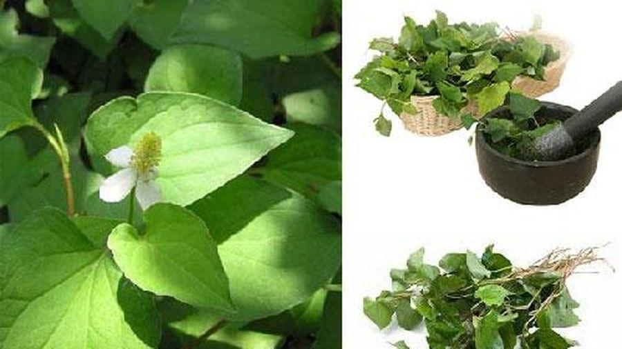 Bí mật về loại rau tiêu diệt ký sinh trùng, chống ung thư có trong vườn của người Việt