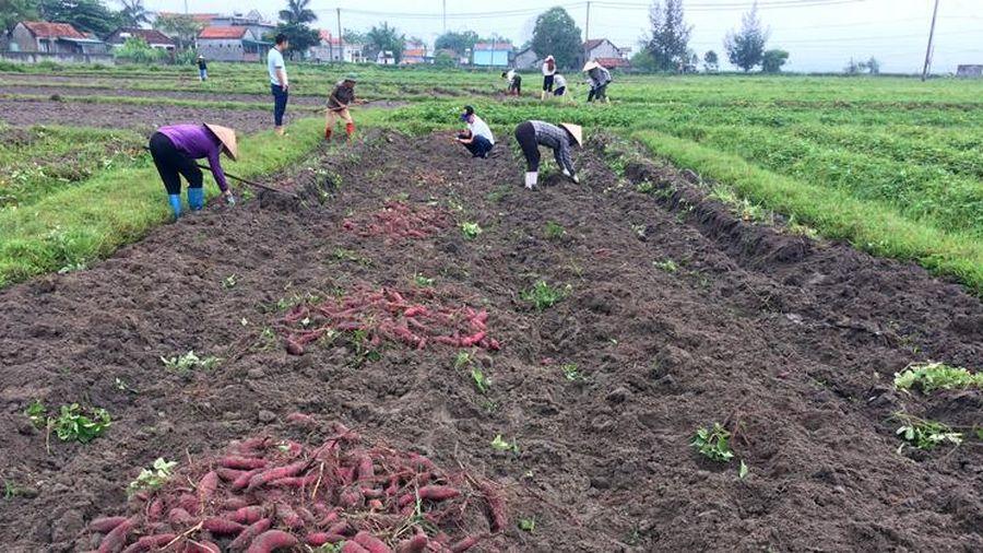 Sản xuất nông nghiệp theo chuỗi liên kết