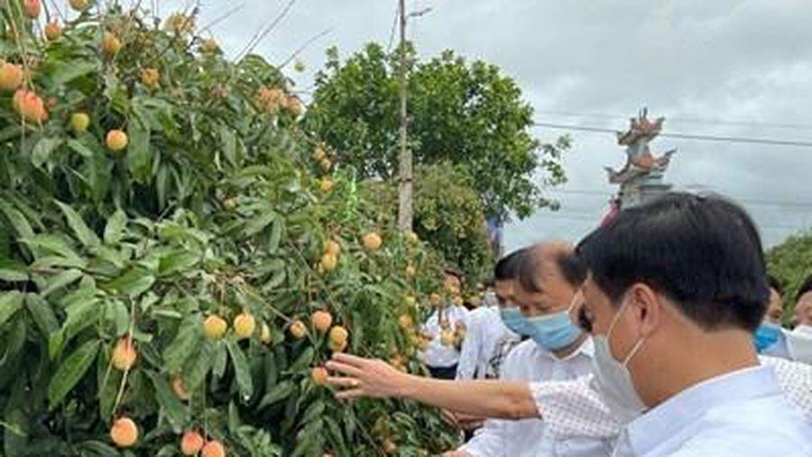 Xuất khẩu lô vải thiều Thanh Hà đầu tiên năm 2021