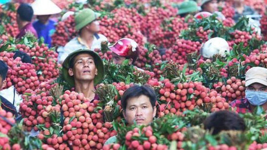 Bắc Giang ban hành kịch bản tiêu thụ 180 nghìn tấn vải thiều trong dịch COVID -19