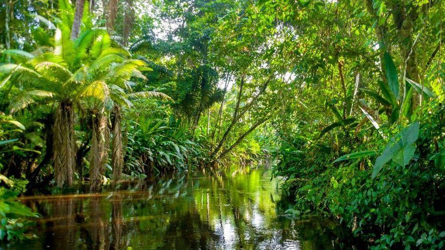'Sức mạnh' đặc biệt của rừng mưa ở châu Phi