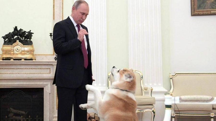 Tổng thống Nga Putin ra lệnh hoàn thiện luật về đăng ký nuôi thú cưng