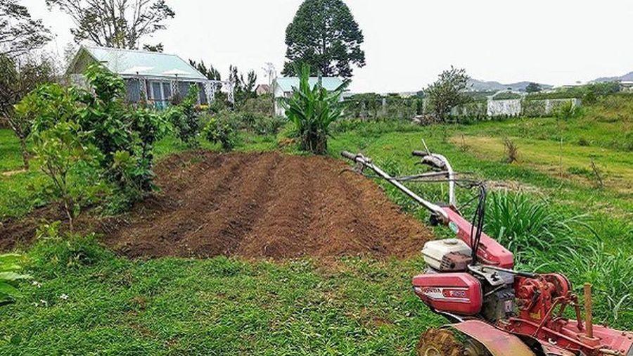 Người thành thị mơ được làm… nông dân