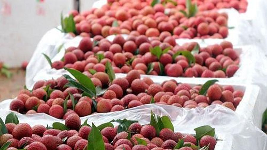 Thị trường Úc sẽ nhập khẩu 100 tấn vải thiều Việt