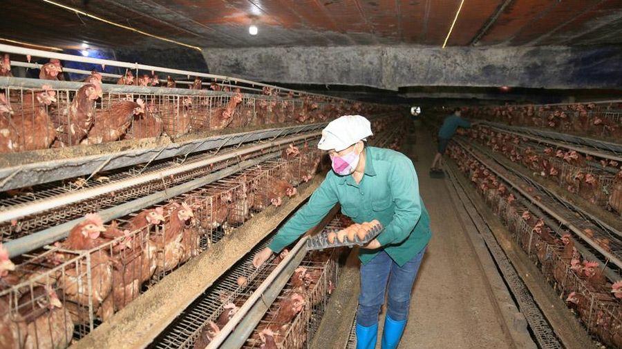 Ngành Nông nghiệp Thủ đô chủ động thực hiện nhiệm vụ kép