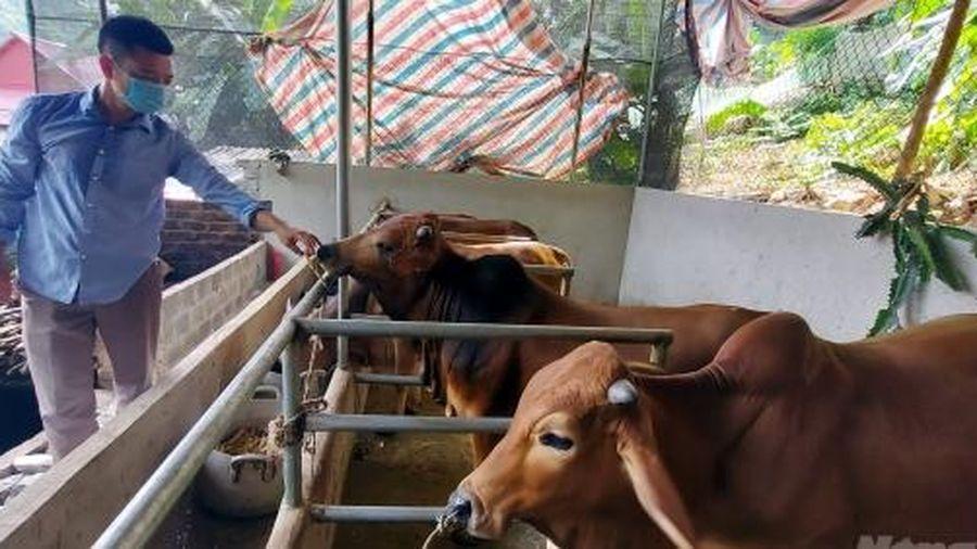 Giảm nghèo từ 'ngân hàng bò'