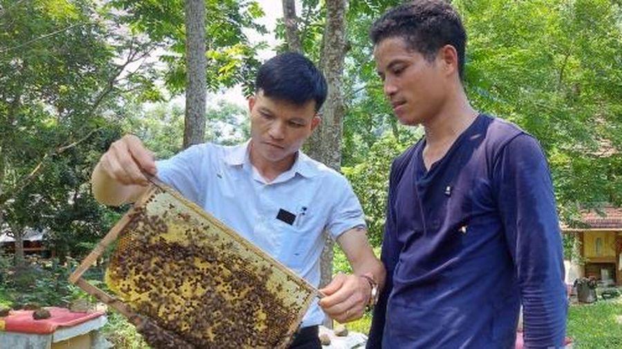 Người Thái làm chủ kỹ thuật nuôi ong lấy mật