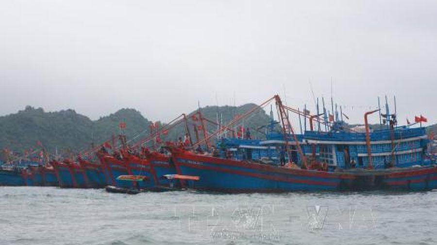 Hải Phòng: Tạm dừng hoạt động giao thông vận tải đường thủy