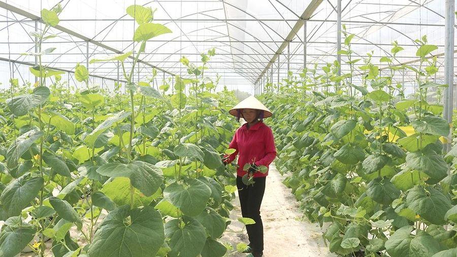 Phú Thọ: Phát triển chuỗi liên kết từ sản xuất, chế biến đến tiêu thụ sản phẩm an toàn