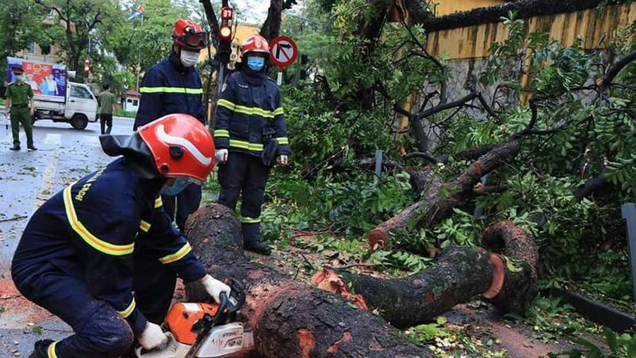 Lực lượng cứu nạn khẩn trương khắc phục sự cố cây đổ trên phố Hỏa Lò